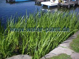 """Pflanzensortiment """"Schwimmteich"""""""