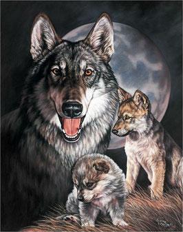 Graham Wolf Experience