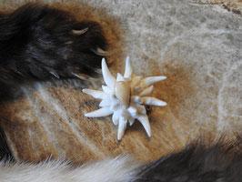 Edelweiss aus Marder- oder Fuchshaken