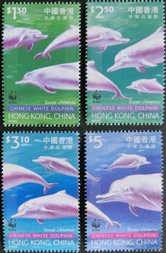 中華白イルカ