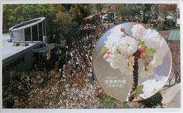 桜の通り抜け貨幣セット平成9年