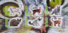 世界の有名な猫   コンゴ共和国