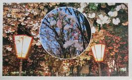 造幣局桜の通り抜け(西暦1992年