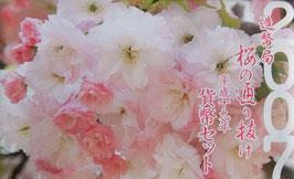 造幣局桜の通り抜け貨幣セット平成19年