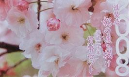 造幣局桜の通り抜け2008年