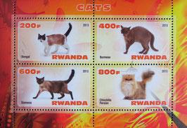 特殊猫  ルワンダ共和国