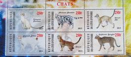 世界の有名な猫    コートジボワール