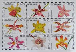 ゆりの花 ニカラグア共和国