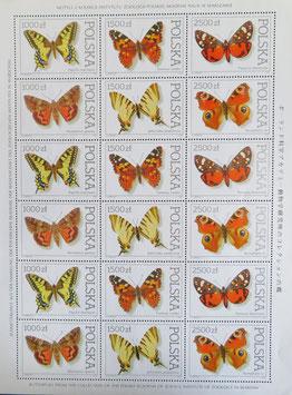 蝶々 ポーランド共和国