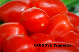 TOMATE OBLONGUE