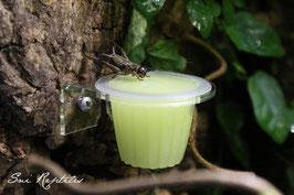 Beetle Feeder