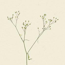 Pflanze#18