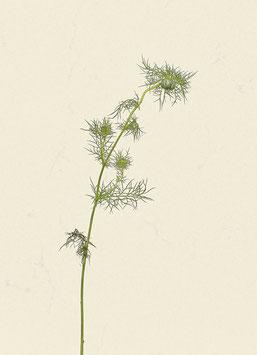 Pflanze#1