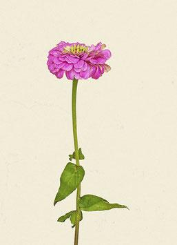 Blume#10