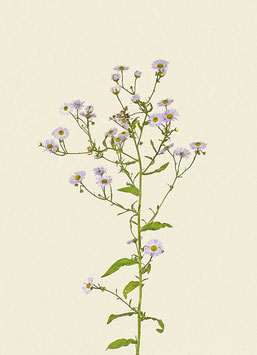 Pflanze#37