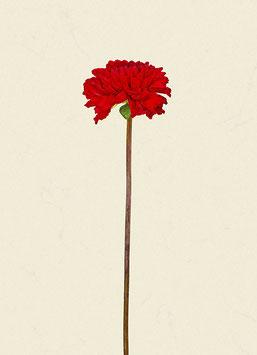 Blume#15