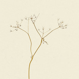 Pflanze#19