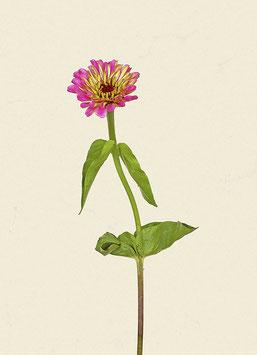 Blume#9