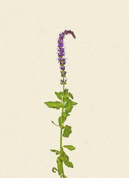 Pflanze#24