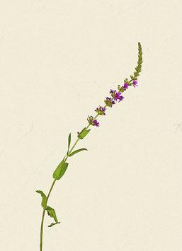 Pflanze#28