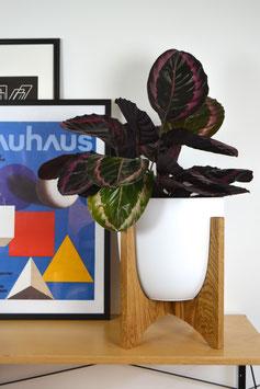 XXL ORBIC N01 Mid Century modern Design Planter Blumentopf Eiche