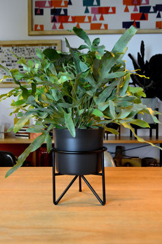 S Mid Century Hairpinleg Planter Plant Stand Blumentopf Schwarz