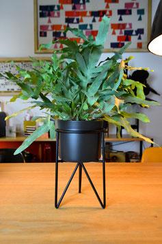 M Mid Century Hairpinleg Planter Plant Stand Blumentopf Schwarz
