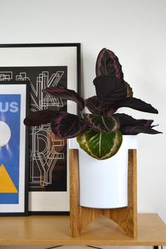 XXL ORBIC N03 Mid Century modern Design Planter Blumentopf Eiche