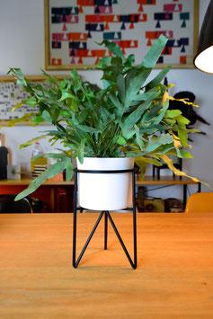 M Mid Century Hairpinleg Planter Plant Stand Blumentopf Weiß