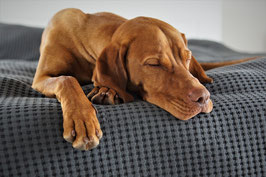 Hunde - Massagen