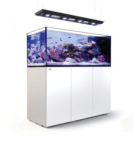 Red Sea REEFER Peninsula P650 Deluxe (160x64x60cm)