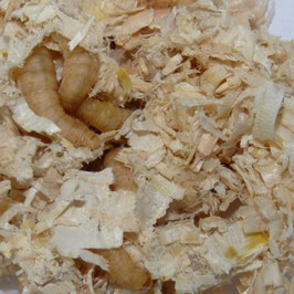 Wasmotten zonder voedingsbodem, ca, 40-50 stuks
