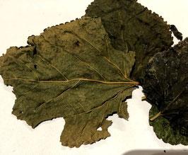 Moerbei blad