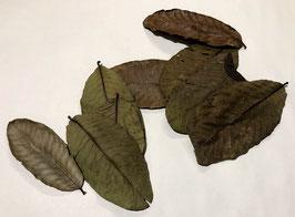 Guave bladeren