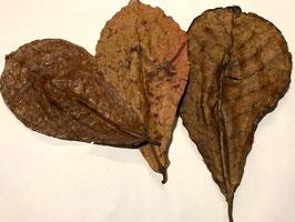 Catappa bladeren M