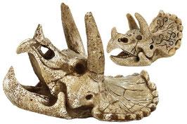Superfish Skull Triceratops