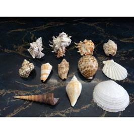 竹島ファンタジー館おすすめの貝 貝殻の詰め合わせ