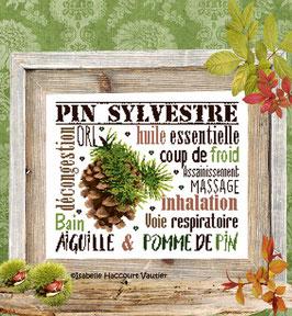 """ref: BDN57 / """" Aiguille & Pomme de pin """""""