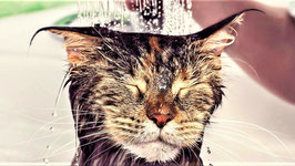 Schwungrad Katzenwäsche