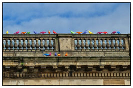 Colored Stone Pigeons - Liverpool