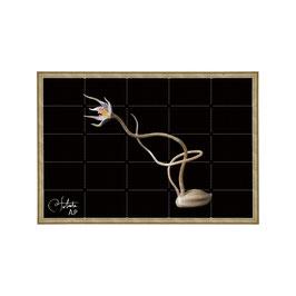 ラベル版画™5241「セロフラワー オリジナル.11」