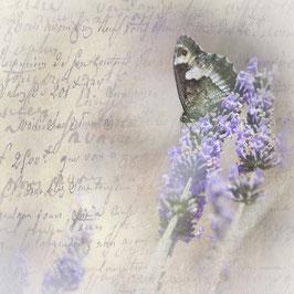QV_Lavendel