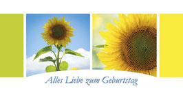 PG_Sonnenblumen