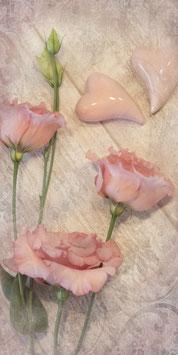 PVH_Sweet pink