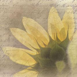 QV_Sonnenblume
