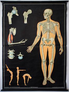 Das Knochengerüst