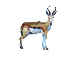 Springbok - Formato A4 - Zoe Mafham