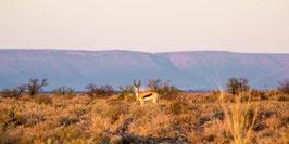 "FOTO ABZUG | Springbok 32°17'52.6""S 22°36'08.3""E"