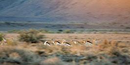 "FOTO ABZUG | Lemonfontein Bokies 32°17'52.6""S 22°36'08.3""E"