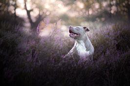 Haustier-Fotoshooting